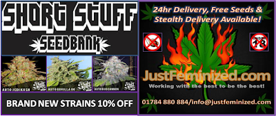 Short Stuff Automatic Flowering Cannabis Strains Discounted