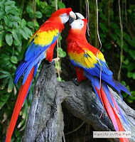 Beautiful parrots and other tropical birds