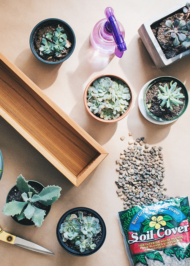 What you need to properly pot succulents