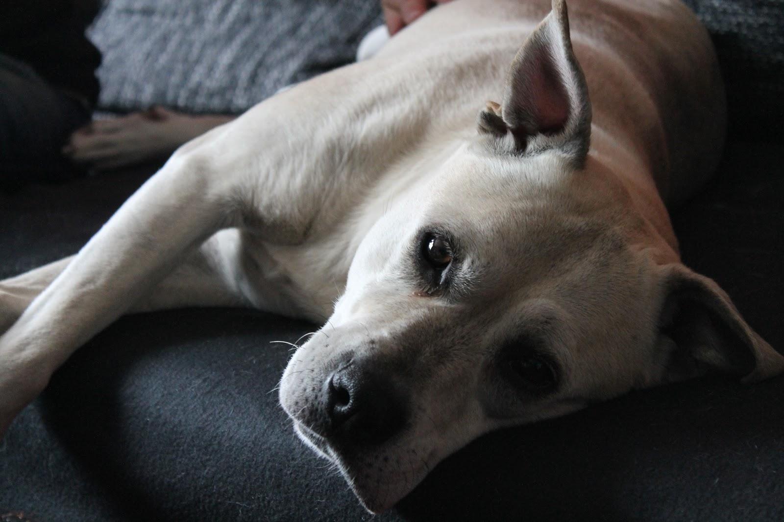 justine wynne gacy vegan mit hund rezepte und tipps nicht nur f r veggie hunde. Black Bedroom Furniture Sets. Home Design Ideas