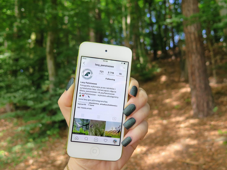 Moje ulubione konta na Instagramie – polskie lasy i zwierzęta