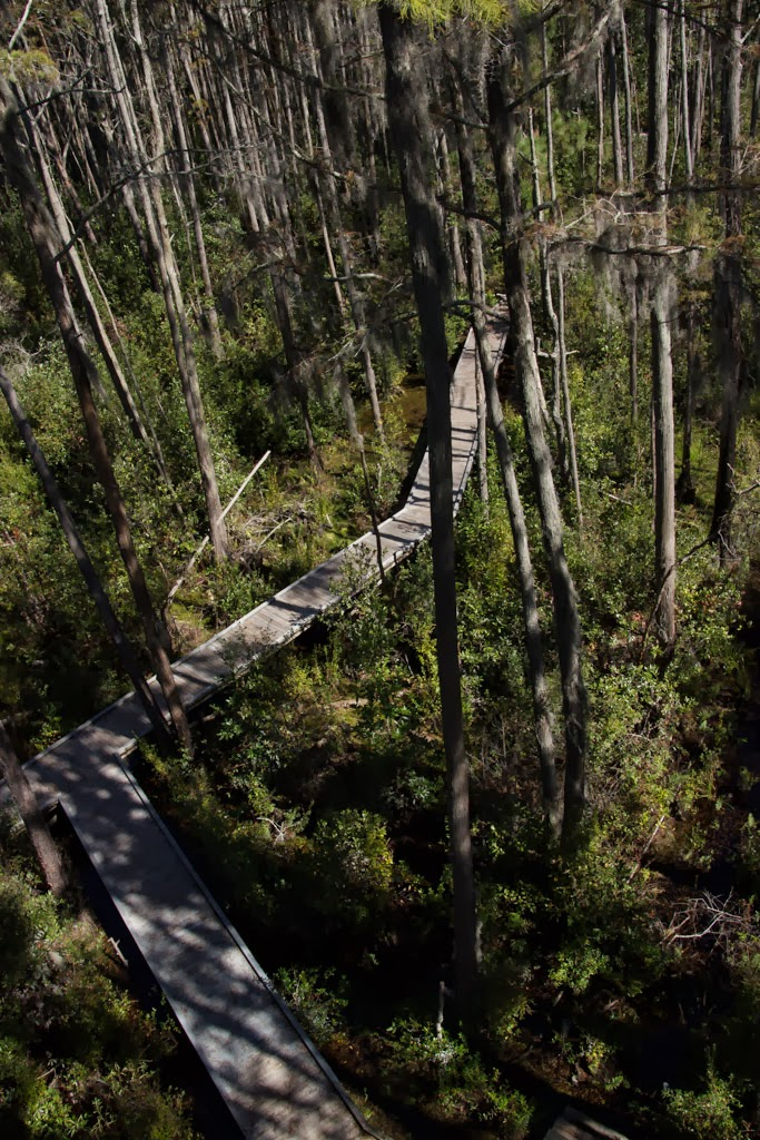 Okefenokee Swamp Park Life in a canne...