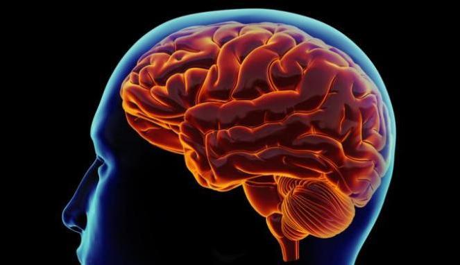 Mengenal Tumor Otak - Penyebab, Gejala dan Pengobatan Alaminya