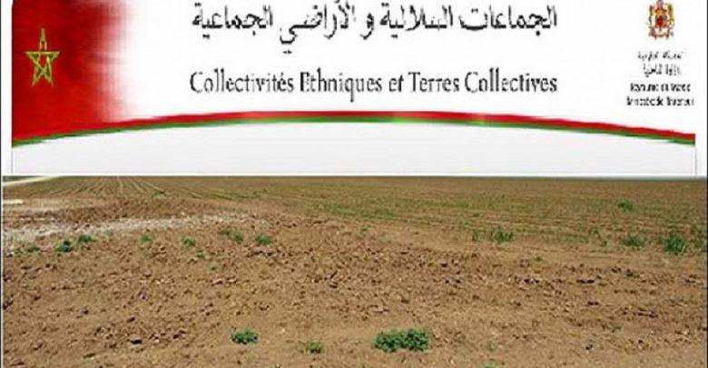 15 مليون هكتار من الأراضي الفلاحية مملوكة للجماعات السلالية تسيل لعاب ملايين المواطنين