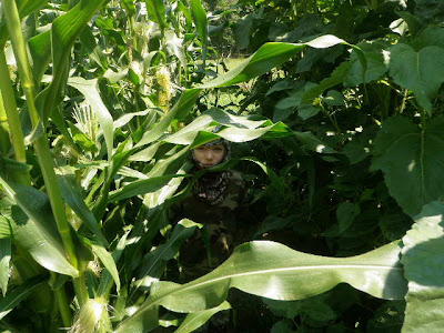 Camo in a corn patch