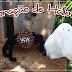 Decoração de Halloween / Halloween Decoration