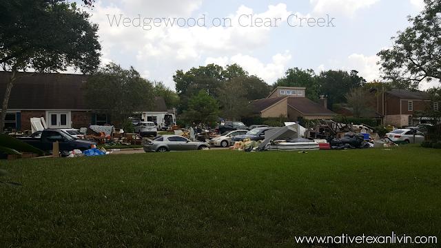 Appleblossom in Wedgewood  Hurricane Harvey  Friendswood, Texas