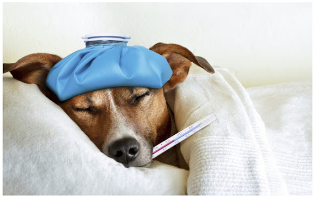 Symptoms, Treatments and Kennel Cough Medicine For Dogs