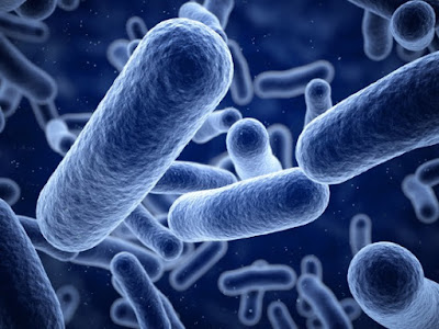 So-called nylon-eating bacterial are not evidence of evolution