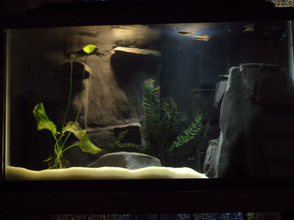 3d Background Aquarium | Background Desktops Pics