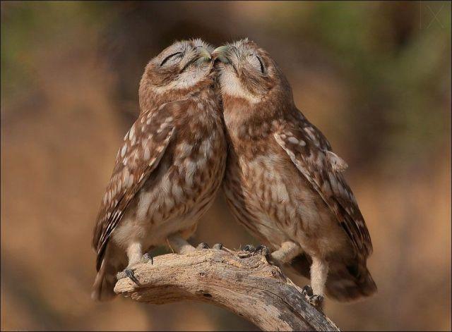 Fotos muy tiernas de animales.