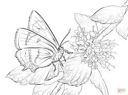 Big butterfly Coloring Pages 11