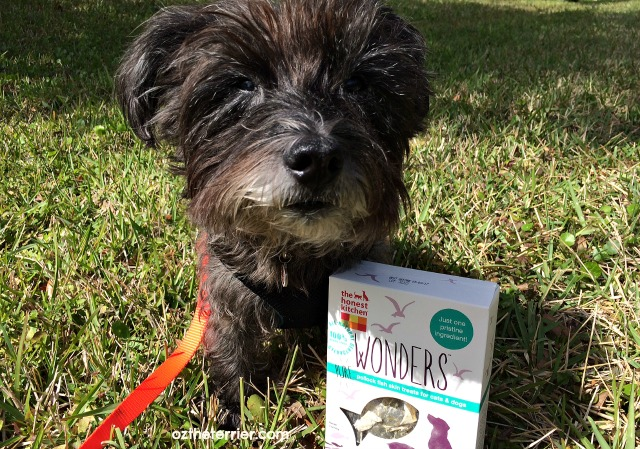 Oz the Terrier The Honest Kitchen Wonders treats for dogs and cats