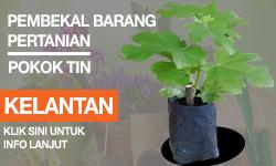 Pembekal Pokok Tin Kelantan
