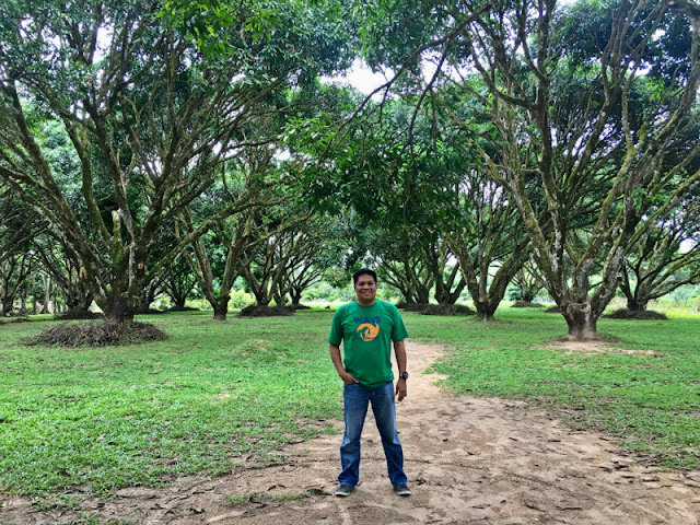 The Guimaras National Mango Research Center has 8.87 hectares where several buildings spread all over the center.  There are administration, horticulture, research, production building, packaging house, guesthouse, function hall and dormitory.