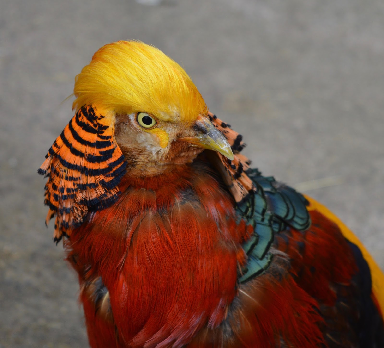 Saltwell Park Pets Corner Exotic Bird