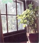 ransangan matahari, gerak pada tumbuhan