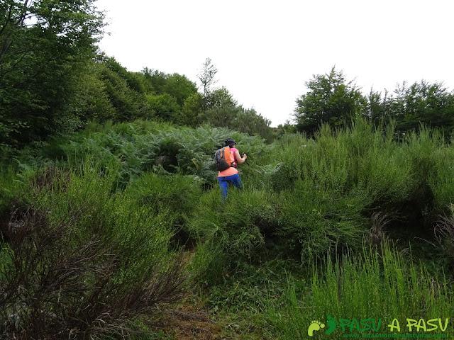 Ruta a Peña Chana: Sendero a las Brañas de Sousa