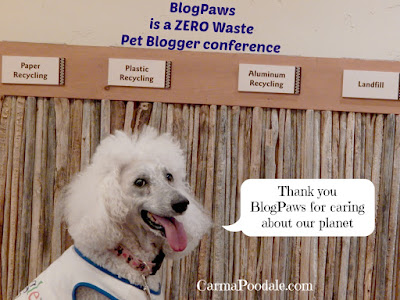 #Blogpaws tried to do zero waste.