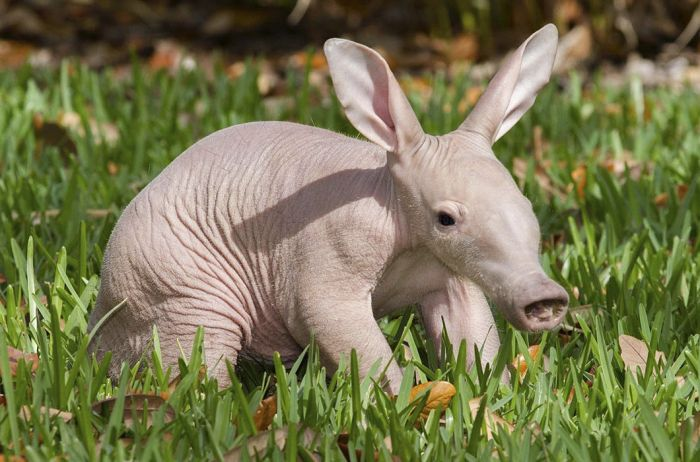 animals strange animal looking confuse mind cool cuddly planet straight every cute