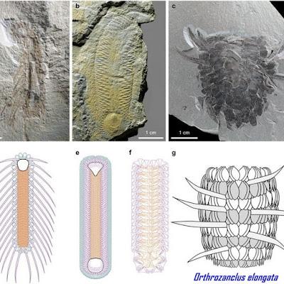 Fosil Hewan Prasejarah Aneh Ditemukan di China