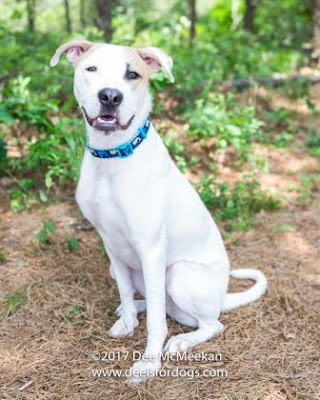 Adoptable dogs in Long Island, New York that are in need of some extra TLC