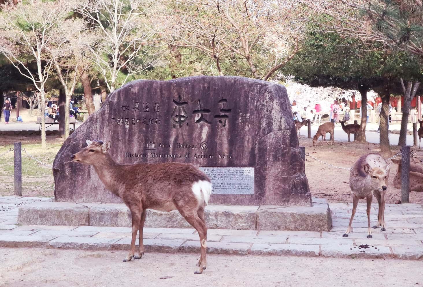 Akses Tercepat Dari Kyoto dan Osaka Menuju Nara