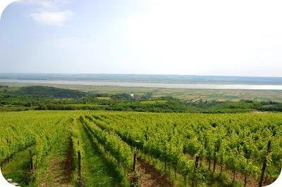 domeniul viticol Dragasi