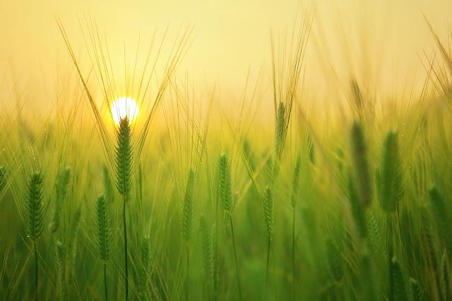 تعريف-الزراعة