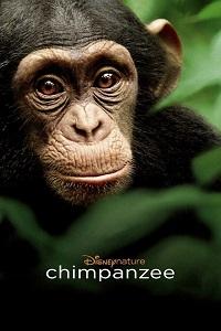 Watch Chimpanzee Online Free in HD