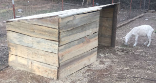 goat shelter idea, inspiring goat shed, learn how to build a goat shelter, ideas for building inexpensive goat shelters, how to build a goat shelter, easy and cost effective way to build a goat shed,