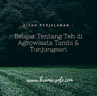 Belajar Tentang Teh di Agrowisata Tambi & Tunjungsari