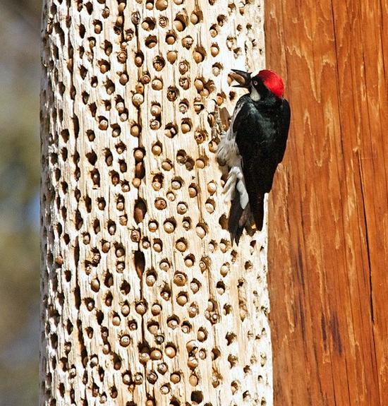 Tripofobia - medo de buracos - Árvore com buracos