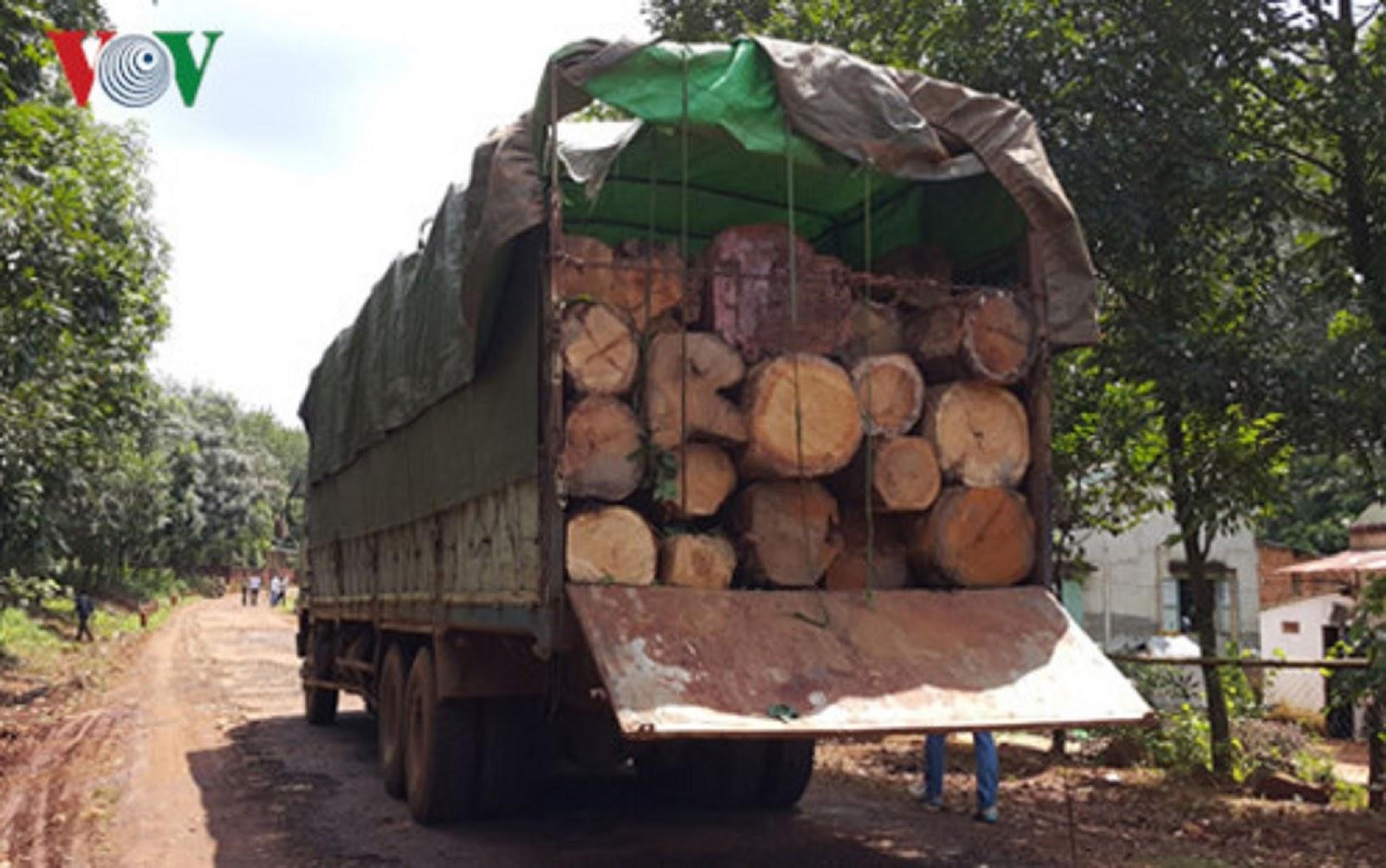 Gia Lai: Biên phòng nổ súng trấn áp, lâm tặc vẫn cướp 3 xe gỗ lậu