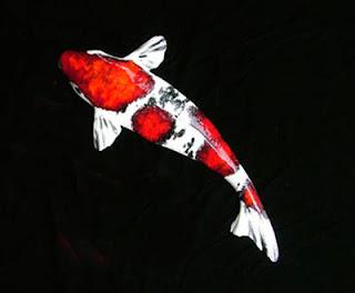 Merawat Ikan Koi