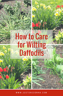 Daffodil Care for Your Garden
