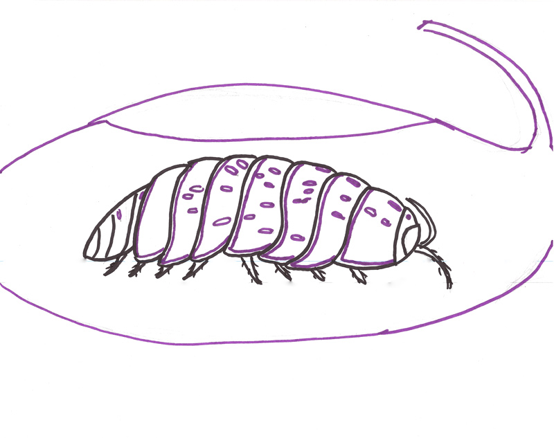 pill bug coloring pages - photo#10