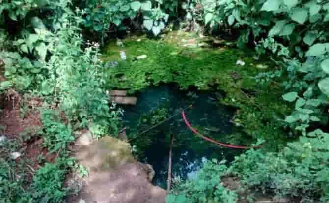 Maleza, agua, plantas