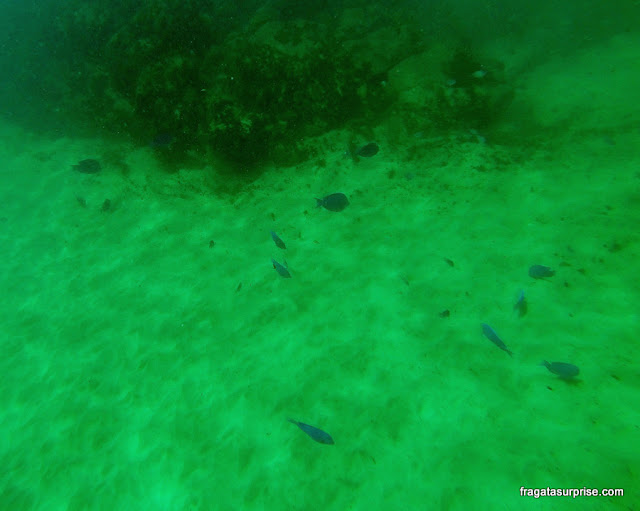 Mergulho em Fernando de Noronha na Praia do Cachorro