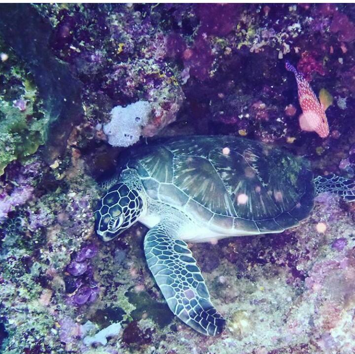 Harga Tiket Masuk Taman Laut Nasional Bunaken Terbaru 2018