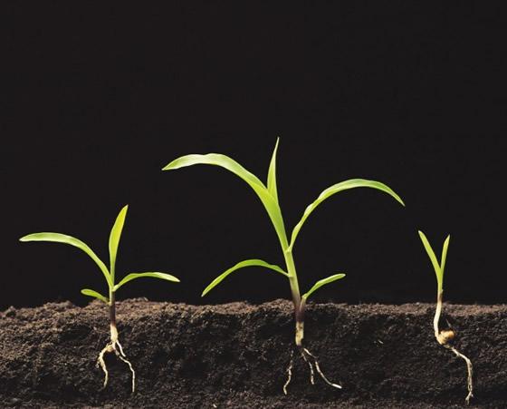 Root Uptake System