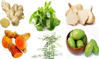 aneka jenis tanaman obat osteoporosis