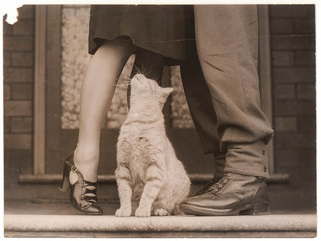 Soldier's goodbye & Bobbie the cat, ca. 1939-ca. 1945 / by Sam Hood. The State Library of New South Wales.