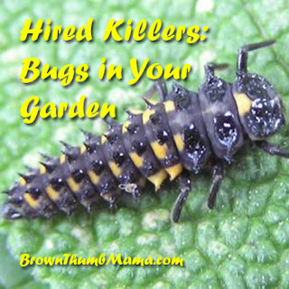 Hired Killers: Bugs in Your Garden | BrownThumbMama.com