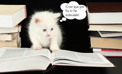 Gatito estudioso