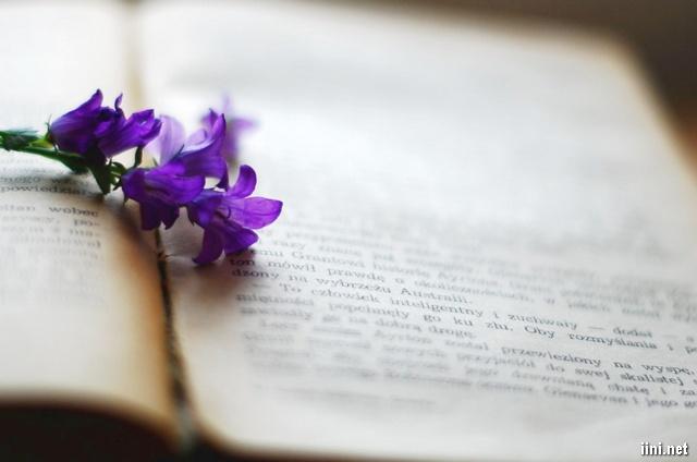 ảnh hoa tím và sách