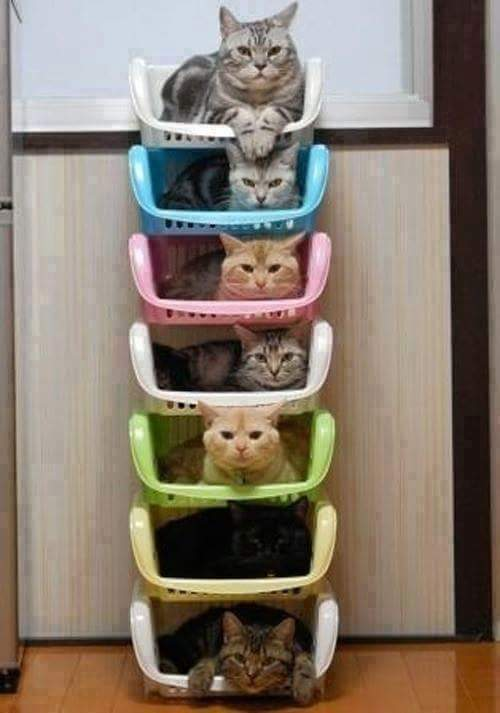 Funny How To Organise Your Cats Joke Picture