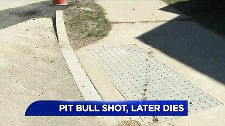 Can I Bury My Dog In My Backyard In Pennsylvania