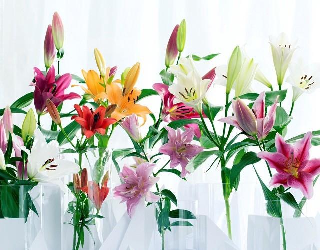 hoa ly dep nhat 4