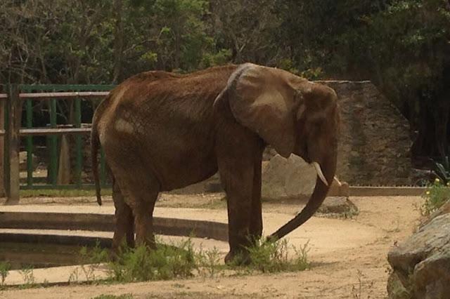 Al elefante del zoológico de Caricuao se le ven las costillas